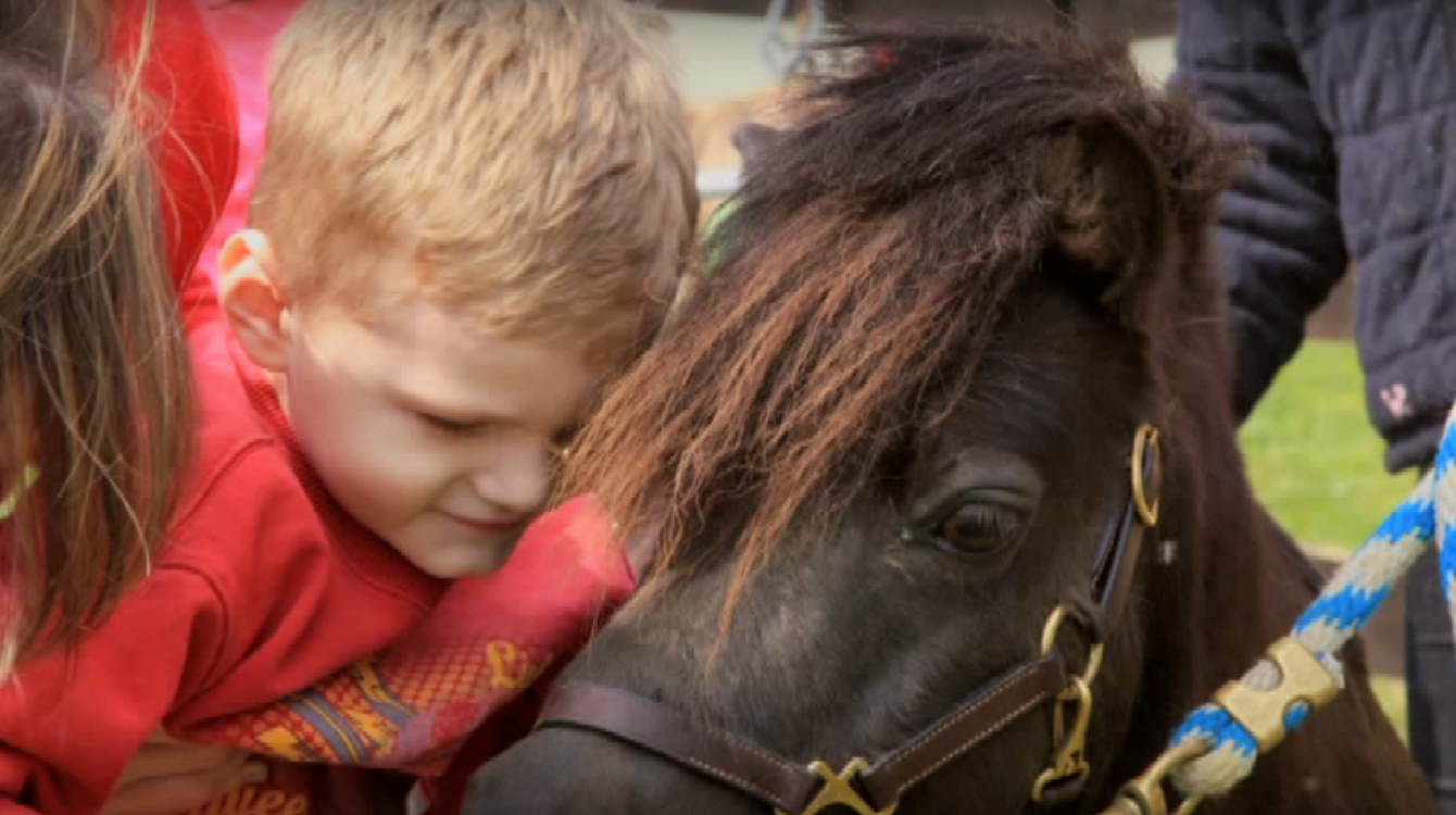 Charity Spotlight: Wheatland Farms